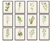 Watercolor Herbs Print Set No.5, Herb Prints, Botanical Prints, Giclee, Print, Kitchen Art, Collage, Wall Art, Watercolor Art