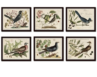 Vintage Bird and Botanical Print Set No.6, Giclee, Art Prints, Antique Botanical Prints, Wall Art, Bird Prints, Mark Catesby