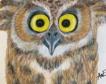 Owl Pencil Portrait