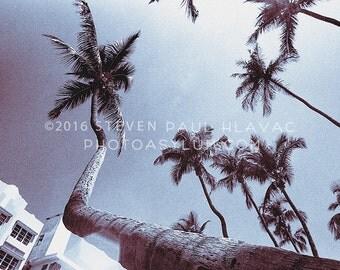 Vintage South Beach Miami 'Wide Palms' Tropical Art Deco Photograph