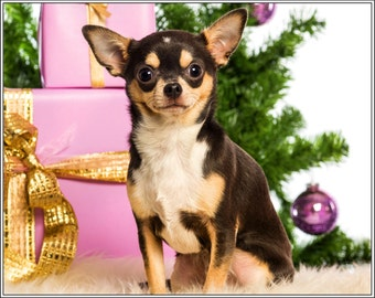 Pack of 4 Puppy Puppies Dog Dogs Chihuahua Christmas Santa Claus Stationery Greeting Notecards/ Envelopes Set