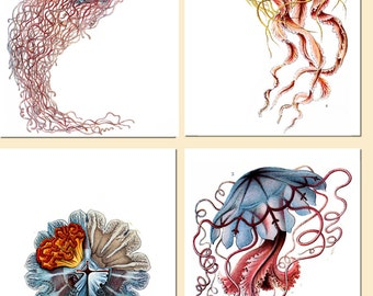 Jellyfish Art Print, Medusa,Multi Color Print, Scientific Illustration, Nautical Art, Marine Life,Art Nouveau,4 canvas Art,Coastal Decor