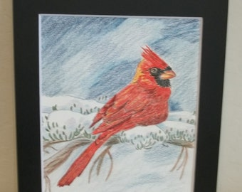 Colored pencil drawing of red cardinal, snow scene, matted, 13x10, birds, nature