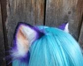 purple kitten ears