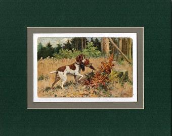 8 x 10 Matted Victorian Bird Dog Quail Hunting Print Antique Postcard 1910