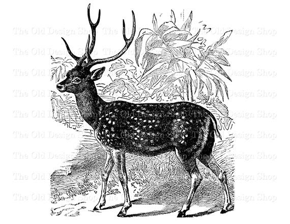 Spotted Deer Vintage Printable Animal Clip Art ...