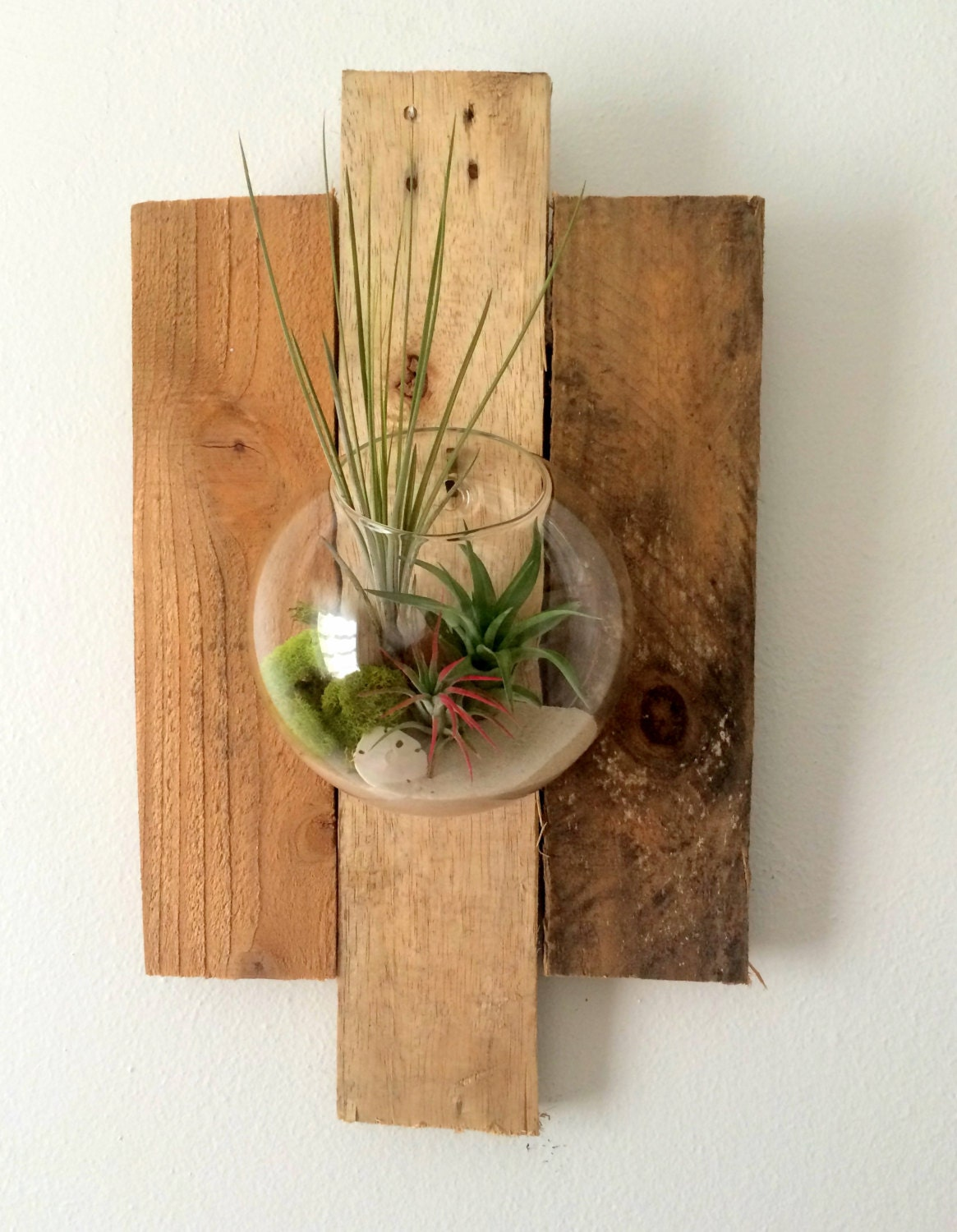 Air plant wall art hanging terrarium clear glass orb with for Air plant wall art