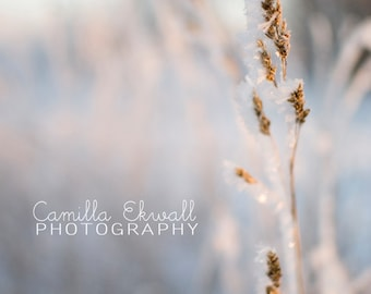 Digital download - photography decor winter grass frost sunset pink nature