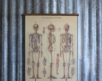 Skeletal System Wallhanging