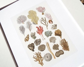 Coral Specimen Collection in Pinks, Naturals and Grays Archival Quality  Print