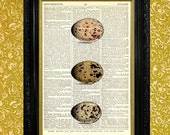 3 Morris Eggs Dictionary Page Art Print, Recycled Upcycled Vintage Book Page Art, Home Dorm or Office Wall Decor, Morris Egg Print, Egg Art