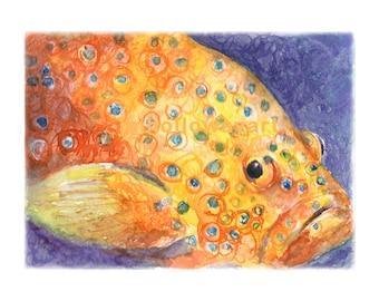 Watercolor Coral Grouper, Coral Grouper Print, Grouper Print, Colorful Fish Print