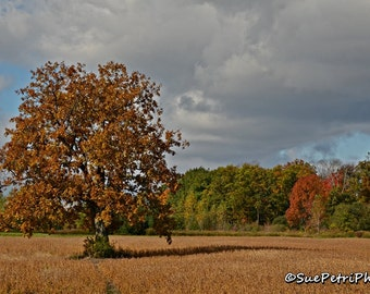 Fall Photography, Fall Scenes, Fall in Canada, Fall in Ontario, Fall Photos, Autumn, Fall Colors, Landscapes, Travel Photos, Free Shipping