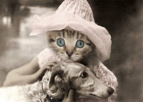 Sylvia, Vintage Cat Print, Anthropomorphic, Cute Cat Photo, Altered Photograph, Photo Collage, Kitten Photo, Cat Art, Nursery Decor