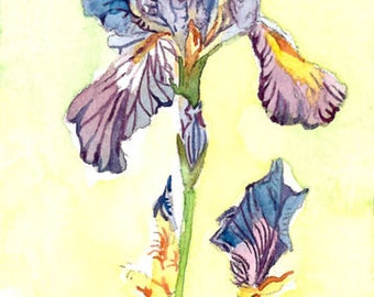 ACEO Limited Edition 1/25 -Into the iris, Hummingbird in flowers, Summer Anna's garden, Gift idea for bird lovers, Bird art print