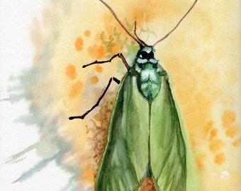 Green Moth, Giclee print of original watercolor, insect lover gift, Adscita statices, Procris Statices