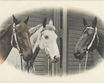 Three Bridled - Antique 1900s Hand Tinted Photogravure Horses Postcard