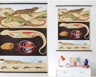 Vintage school pull down chart map lizard gecko zoology West German Jung Koch Quentell