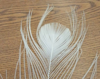 "100% Cruelty Free - Lot of 30 Natural White Peacock 20-36"" Eyed Tail Feathers WHT1"