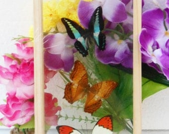 4 REAL mixed BUTTERFLIES Taxidermy Double Glass in Frame /BFD04Q