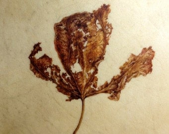 Decaying leaf watercolour