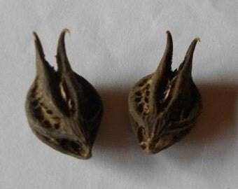 Bats Head Root