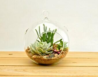 "Succulent Terrarium Kit 3 Succulents, 5"" Round Glass Globe, River Rocks and Soil"