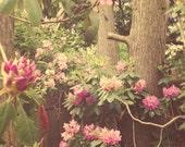 Flower Photography - roses - shabby chic, home decor, vintage tones, pastels - pink - fuchsia - green - feminine - woodland - trees - fPOE