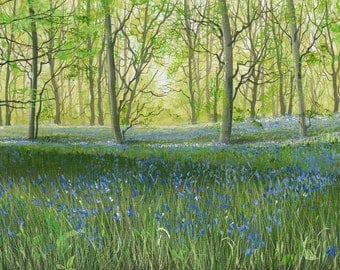 Panoramic Size- Bluebell Woods - Limited Edition Print