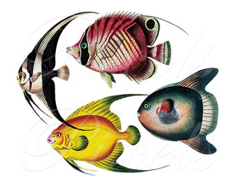 FISHES 4 in 1, best offer, Instant Download Digital Downloads, printable fish illustration, image fish clipart red yellow no.460