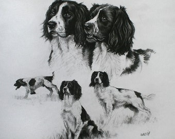 Beautiful Springer Spaniel dog art dog gift dog print gun dog limited edition mounted ready to frame from a charcoal sketch by H Irvine