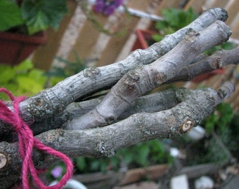 Fig wood sticks, Craft Supply, Magical Tool, Wicca, Pagan, Natural