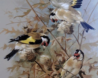 Vintage Bird Book Plate Page of Goldfinch printed 1965 Illustration