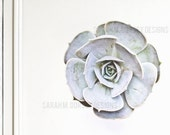 Succulent Photography Digital File