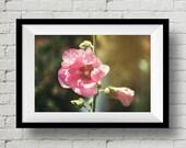 Gem, Nature Photography,  Wall Art, Flower Photo, Wall Art Print, Pink, Pink Flower, Fine Art Print, Wall Deco, Home Deco, Garden, Floral