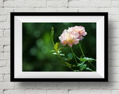 Pink Flower Fine Art Print, Focus, Fine Art Print, Nature Photography,  Wall Art, Flower, Wall Deco, Home Deco, Floral, Rose