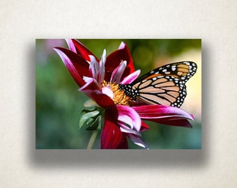 Monarch Butterfly Canvas Art, Butterfly Wall Art, Insect Canvas Print, Close Up Wall Art, Photograph, Canvas Print, Home Art, Wall Art