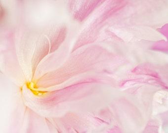 Fine Art Photography, Soft Pink Peony, Floral Photography, Nursery Wall Art Print