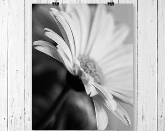 Daisy Print Black and White Flower Print Daisy Art Print Flower Art Home Decor Nature Photography Flower Photography Daisy Wall Art