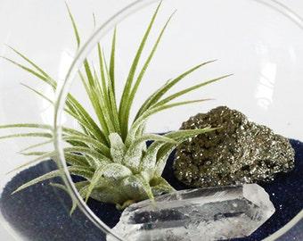 Terrarium Kit - Air Plant, Pyrite, Clear Quartz Crystal, and Navy / Lapis Color Sand || Small