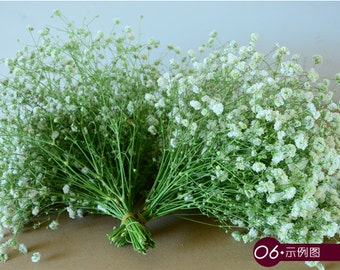 Real Flowers Babys Breath Bouquet 20-30cm Dried Babysbreath For Wedding Aisle Decoration Table Centerpieces