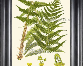Antique Fern Art Print 7 Lindman  Botanical Antique Beautiful Green Ferns Forest Nature Natural Science Poster Chart to Frame Wall Decor