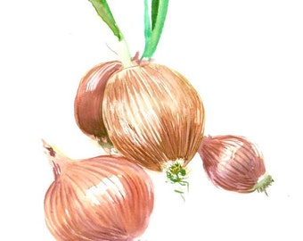Onion art original watercolor red kitchen onion painting 12 x 9 in