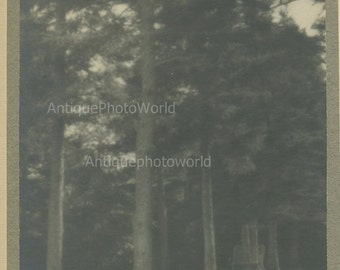 Forest trees antique art photo by J. Hanna