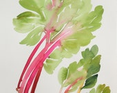 "12"" x 16"" Swiss Chard Study - Original Painting"