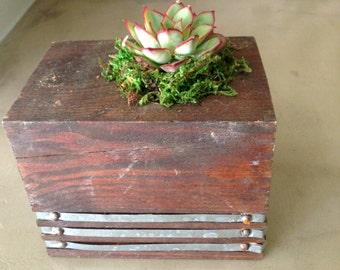 Modern Succulent Wood Planter, Reclaimed Wood Planter, Contemporary Planter, Succulent Garden, Succulent Arrangement
