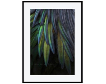 Iridescent Feather Wall Art, Blue Green Feather Print, 12x16 Print, Large Photography, Fine Art Nature Photography