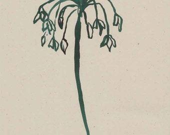 Number 164 Allium