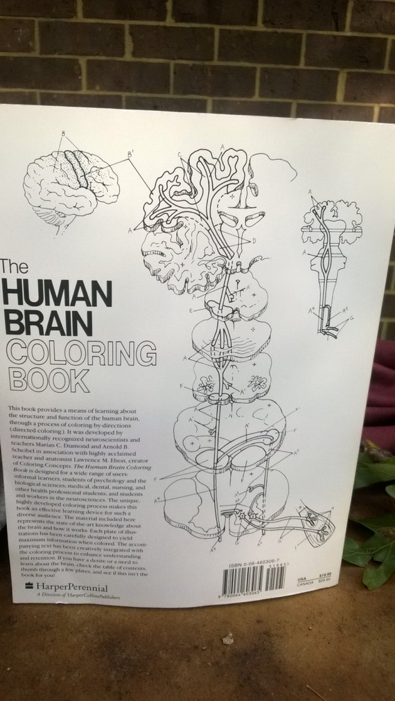 human brain coloring book new unused softcover book 300 pages of frontal media lobes with exacting details - The Human Brain Coloring Book