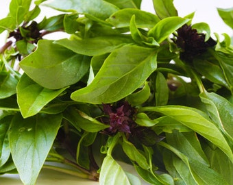 Basil seeds,non gmo basil seeds,34 ,organic heirloom seeds,gardening, herb seeds, pesto herbs, vegan plant seeds